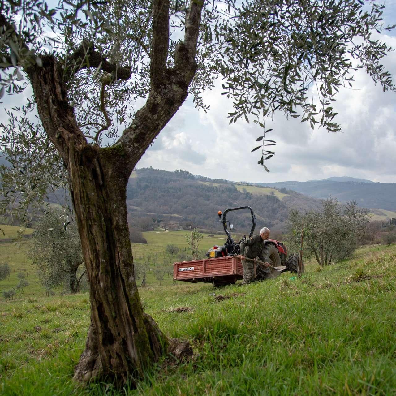 trattore nella tenuta de' Le Colline del Paradiso in Mugello